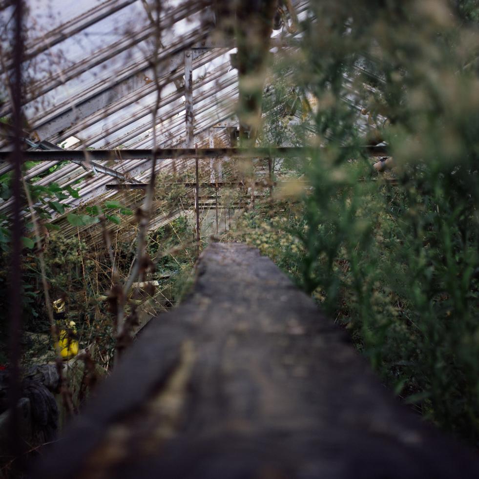 Vieille planche en bois suspendue